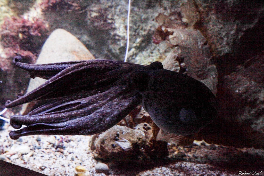 aquarium vendée